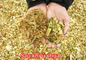 u-chua-co-cay-chuoi
