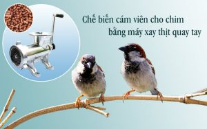 máy ép cám chim