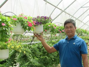 trồng hoa