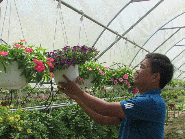 làm giàu từ trồng hoa
